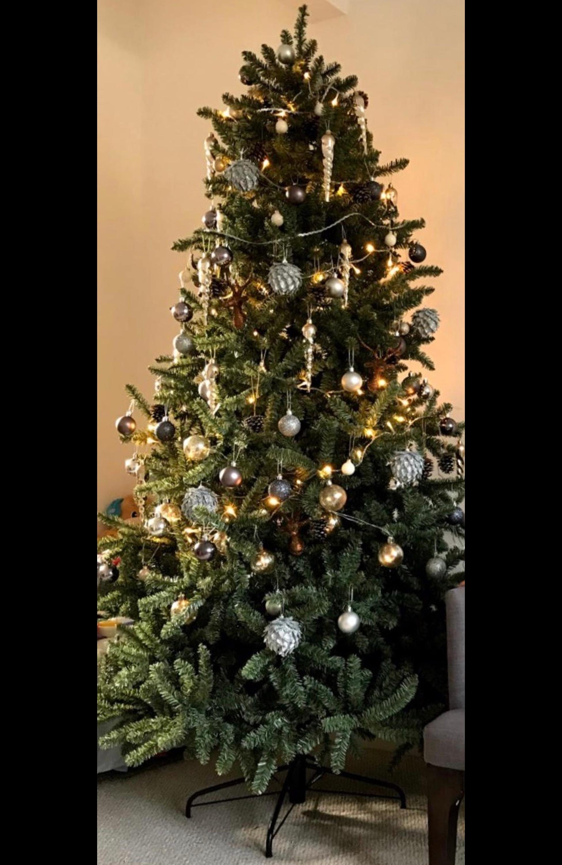 Christmas Tree - Canadian Blue Green Spruce in N10 Barnet for £100.00 for sale | Shpock