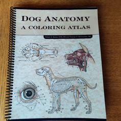 Dog Anatomy Colouring Atlas in SS9 Sea for £35.00 for sale ...