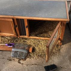 Guinea Pig Hutch Run In Nr9 Norfolk For 50 00 For Sale Shpock