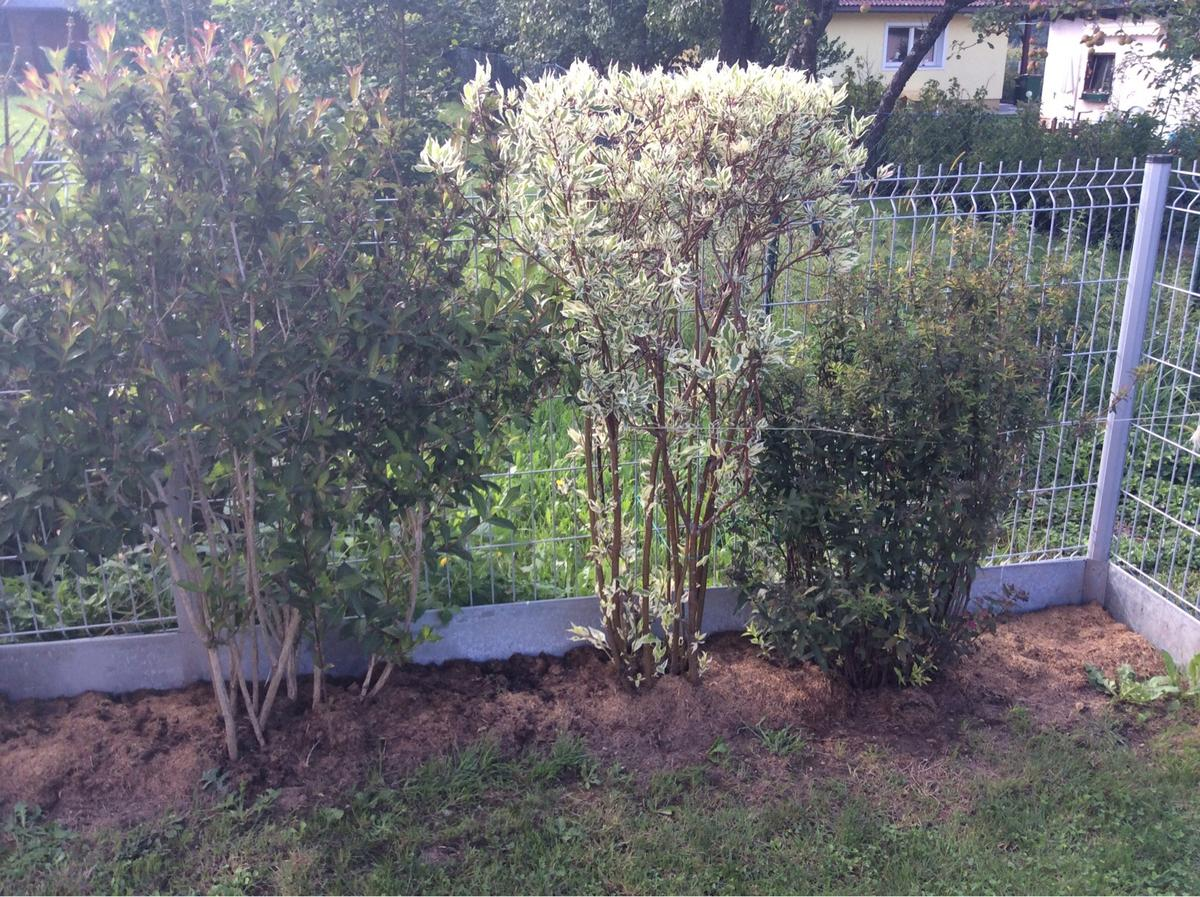 Straucher Hecke In 9102 Mittertrixen For 1 00 For Sale Shpock