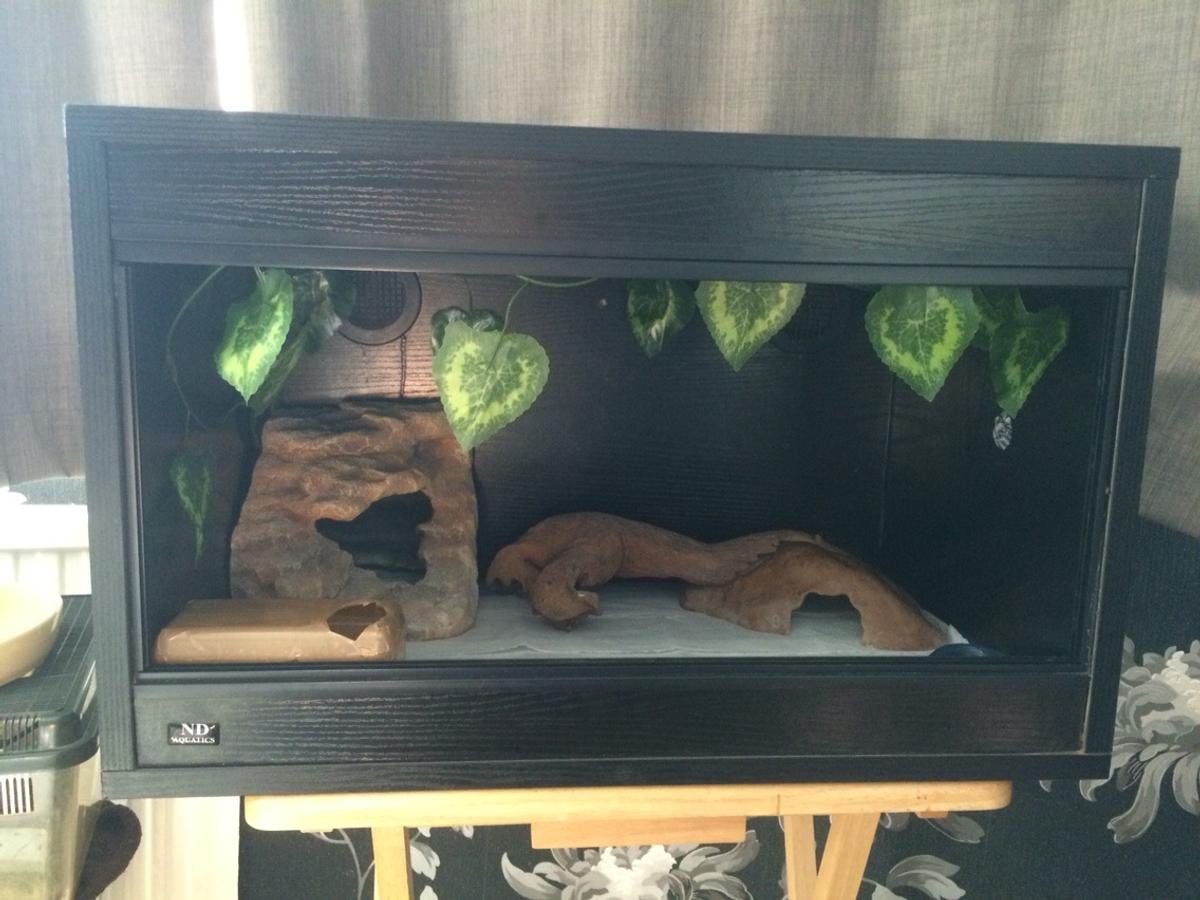Leopard gecko + vivarium in BN20 Eastbourne for £45 00 for