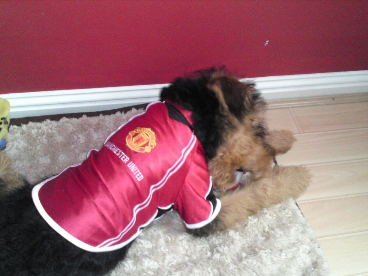 Manchester United Dog Shirt In Eh21 Musselburgh For 5 50