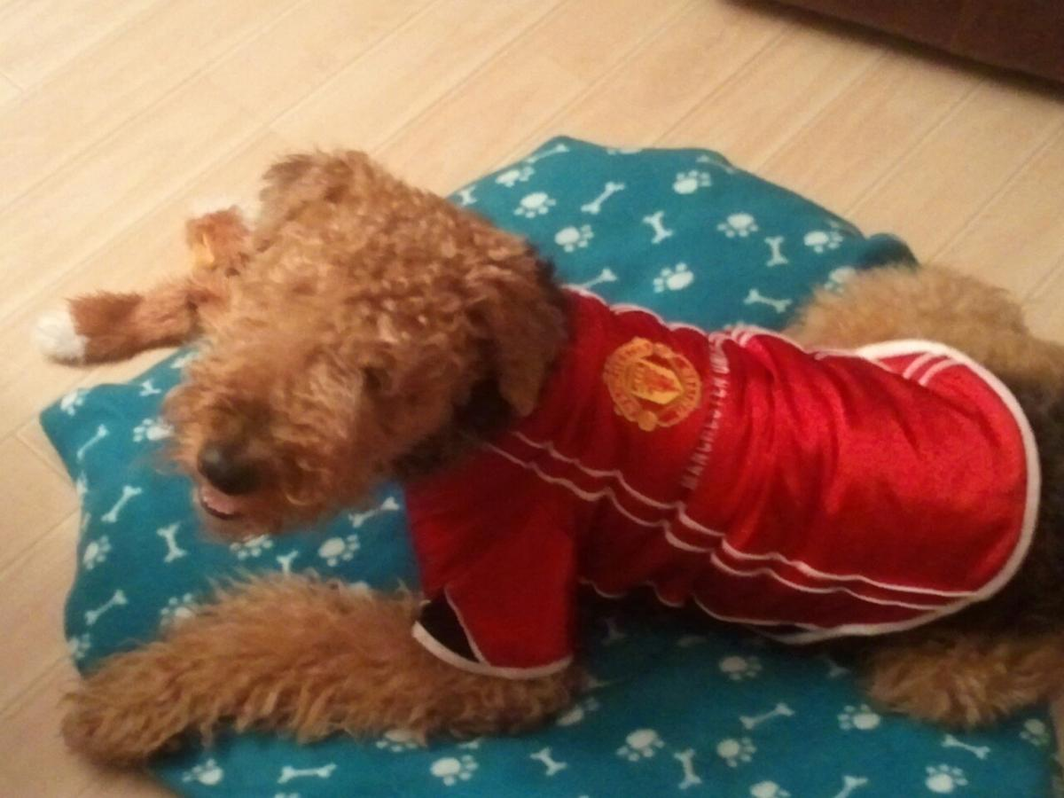 Manchester United Dog Shirt In Eh21 Musselburgh For 5 50 For Sale Shpock