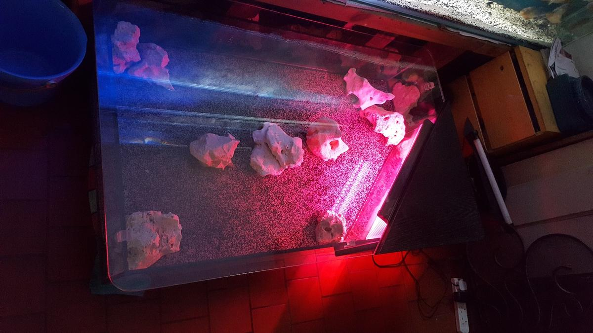 Fish Tank Coffee Table In Wv3 Wolverhampton For 35000 For