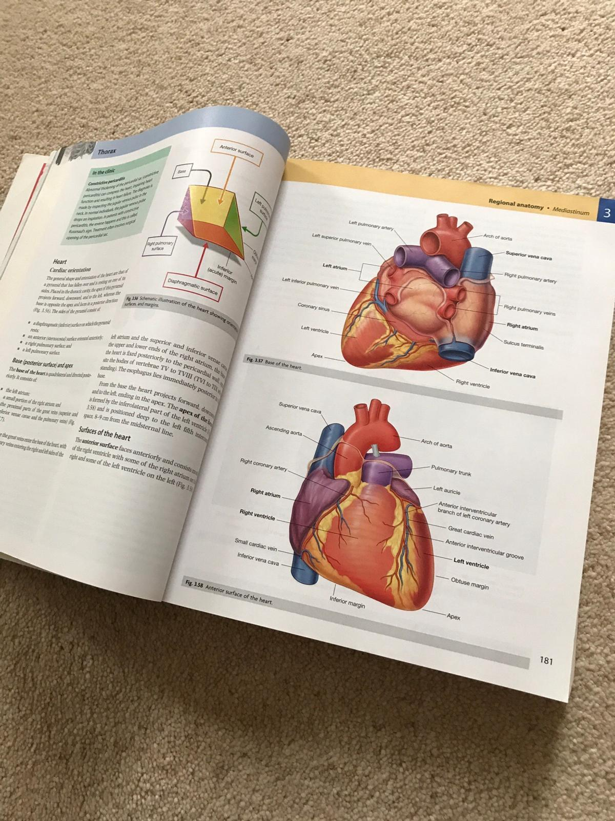 Grays Anatomy For Students In Le1 Leicester For 20 00 For Sale Shpock