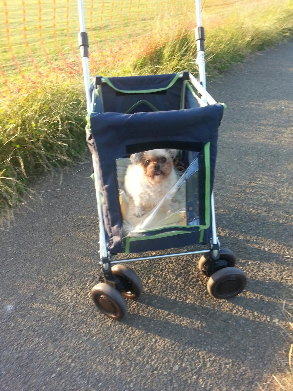 Dog trolley for medium or small dogs in BN3 Hove for £30 00
