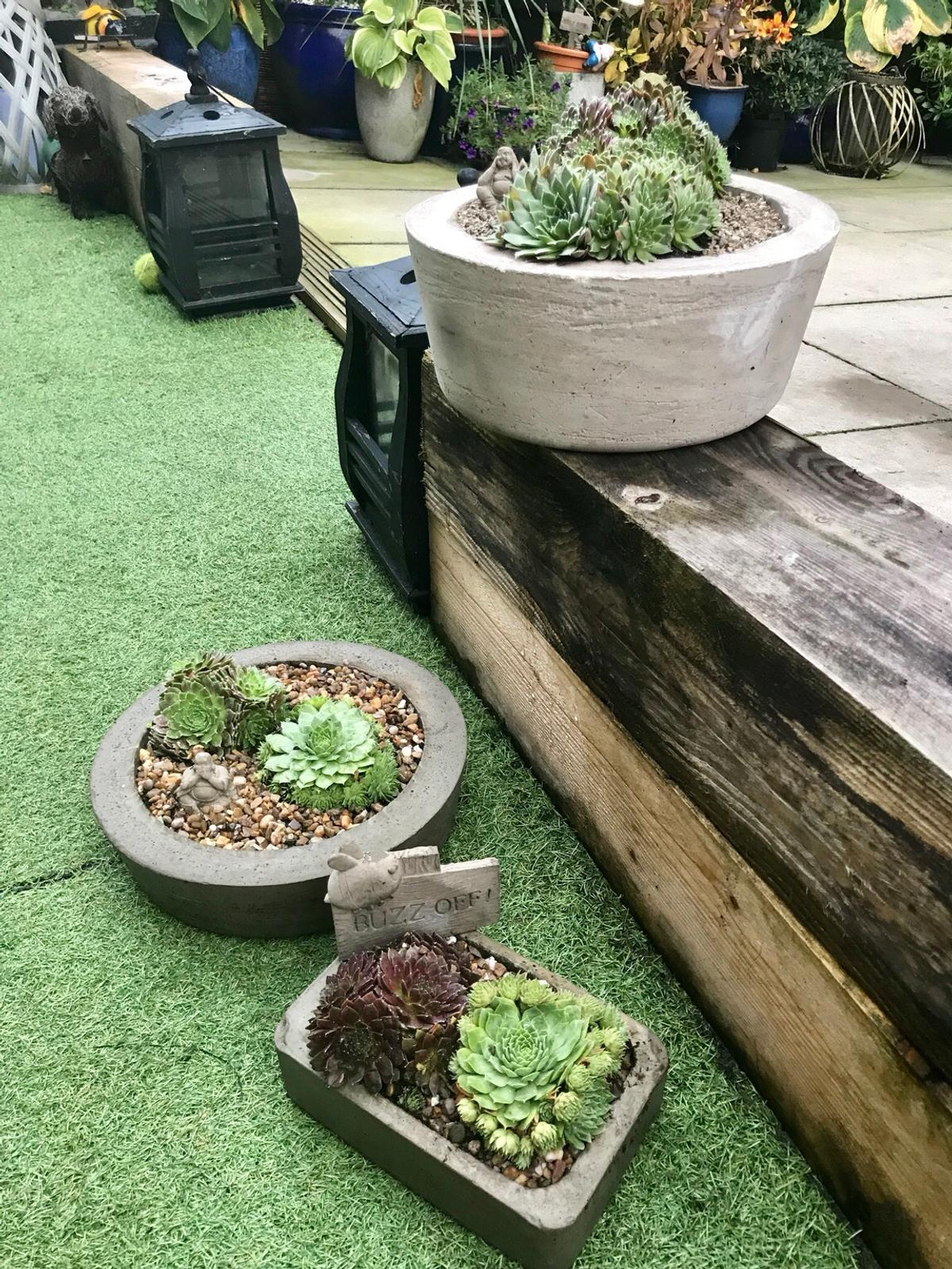 Stone Garden Planters/succulent/Buddha In Salford For £15.00 ...
