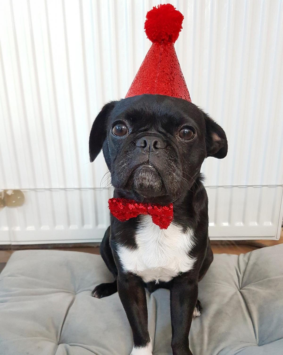 Pet Birthday Party Hat Bow Tie For Cat Or Dog In Stanford Le Hope