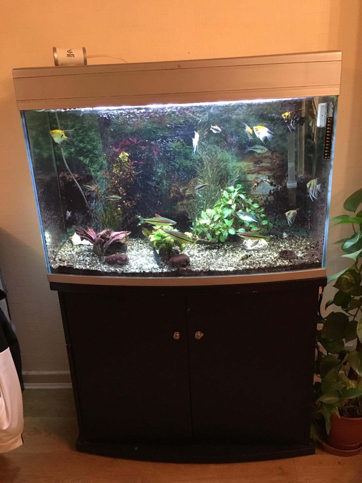 Fish Tank and Stand/Cupboard in Wigan for £80 00 for sale