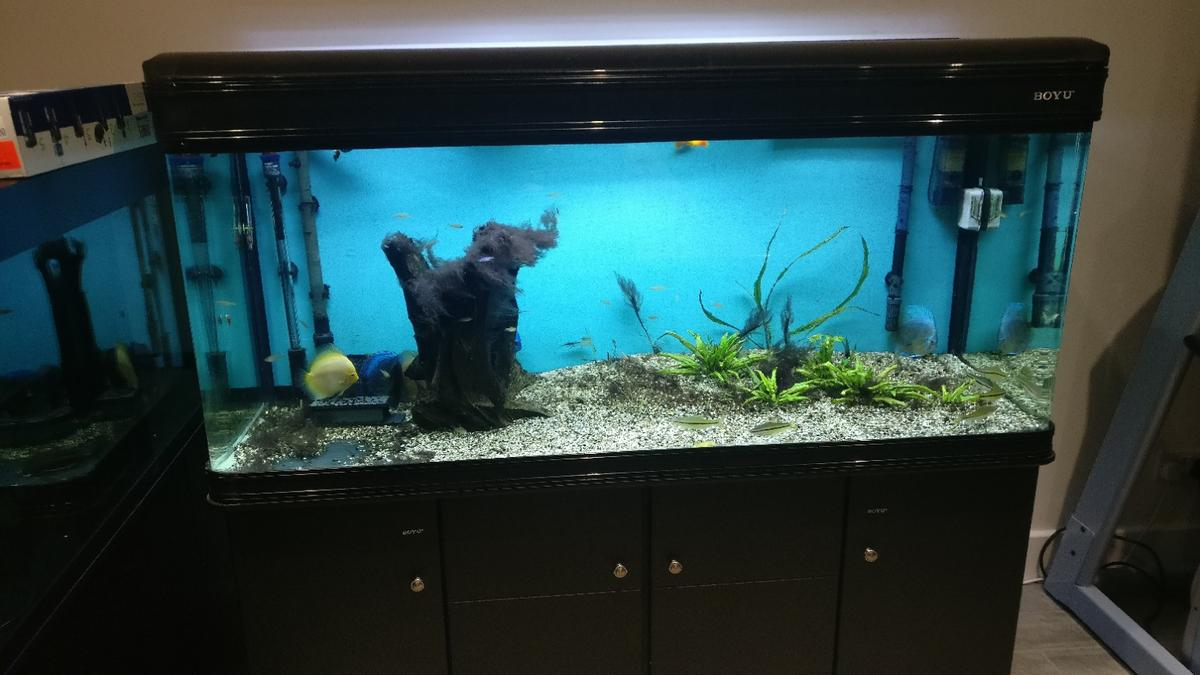 Welp 5ft Boyu 520ltr fish tank in Peterborough for £300.00 for sale TR-11