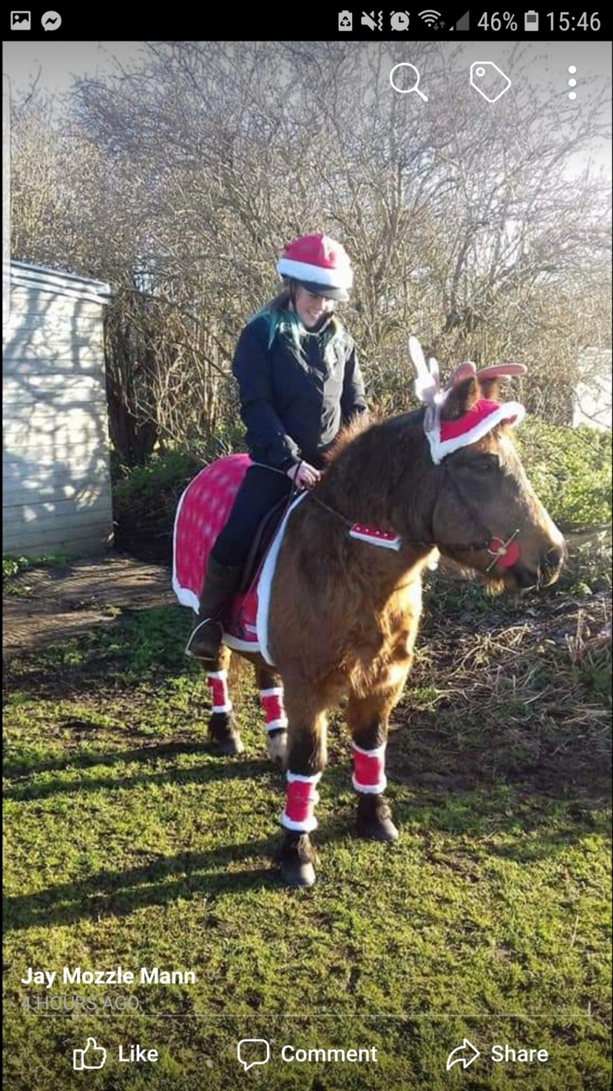 Christmas Dress Up For Horse In Walsall For 20 00 For Sale Shpock