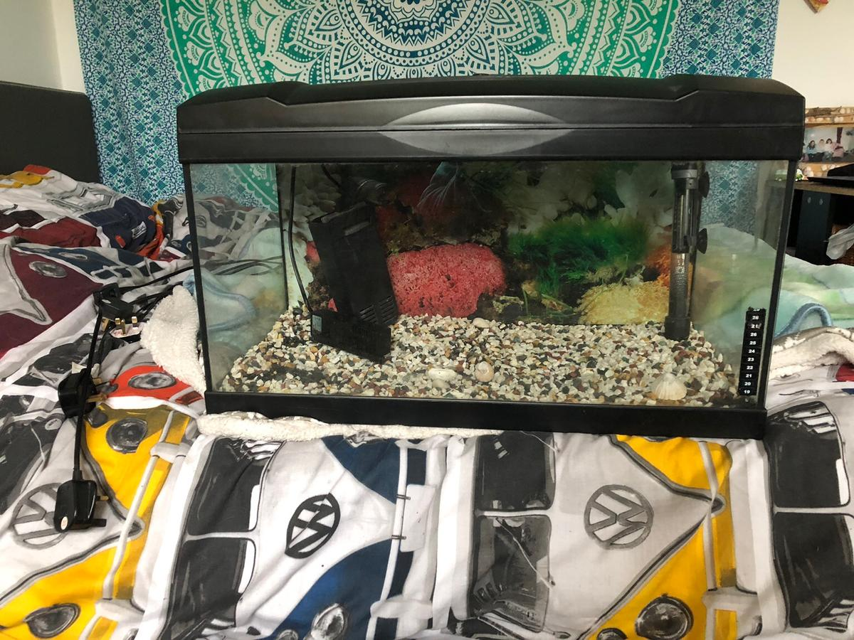 Large Fish Tank In North Devon For 100 00 For Sale Shpock