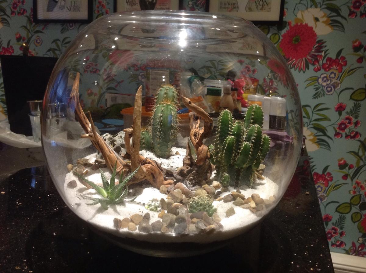 Terrarium In S12 Sheffield For 40 00 For Sale Shpock