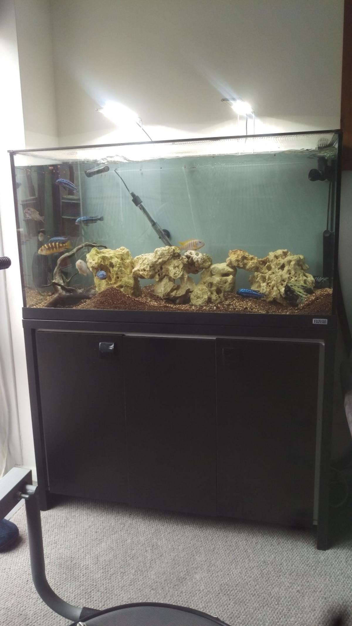 Phenomenal Fluval Roma 215 Litre Cichlid Setup Fish Tank In N15 London Download Free Architecture Designs Scobabritishbridgeorg