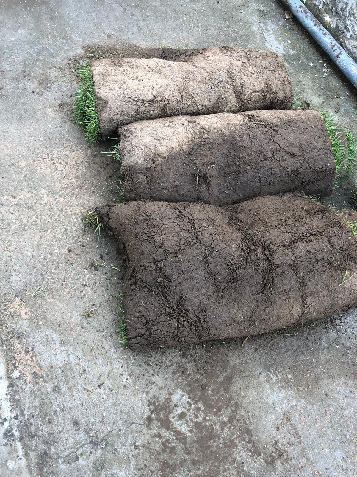 Rolawn Medallion Turf >> Rolawn Medallion Turf In E7 London For Free For Sale Shpock