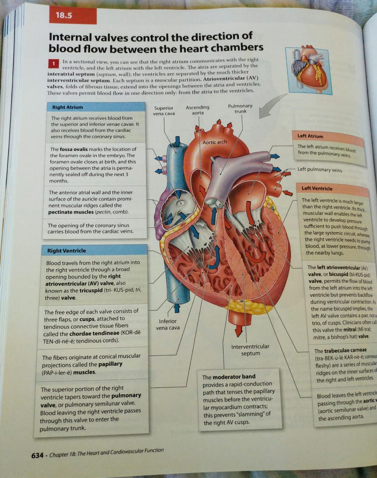 Visual Anatomy & Physiology Book (979 pages!) in Lewsey Farm