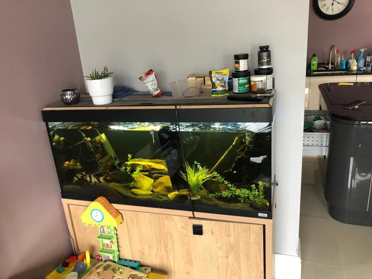 Wondrous 4Ft Fluval Fish Tank 240L In Wv10 Wolverhampton Fur 230 00 Download Free Architecture Designs Rallybritishbridgeorg