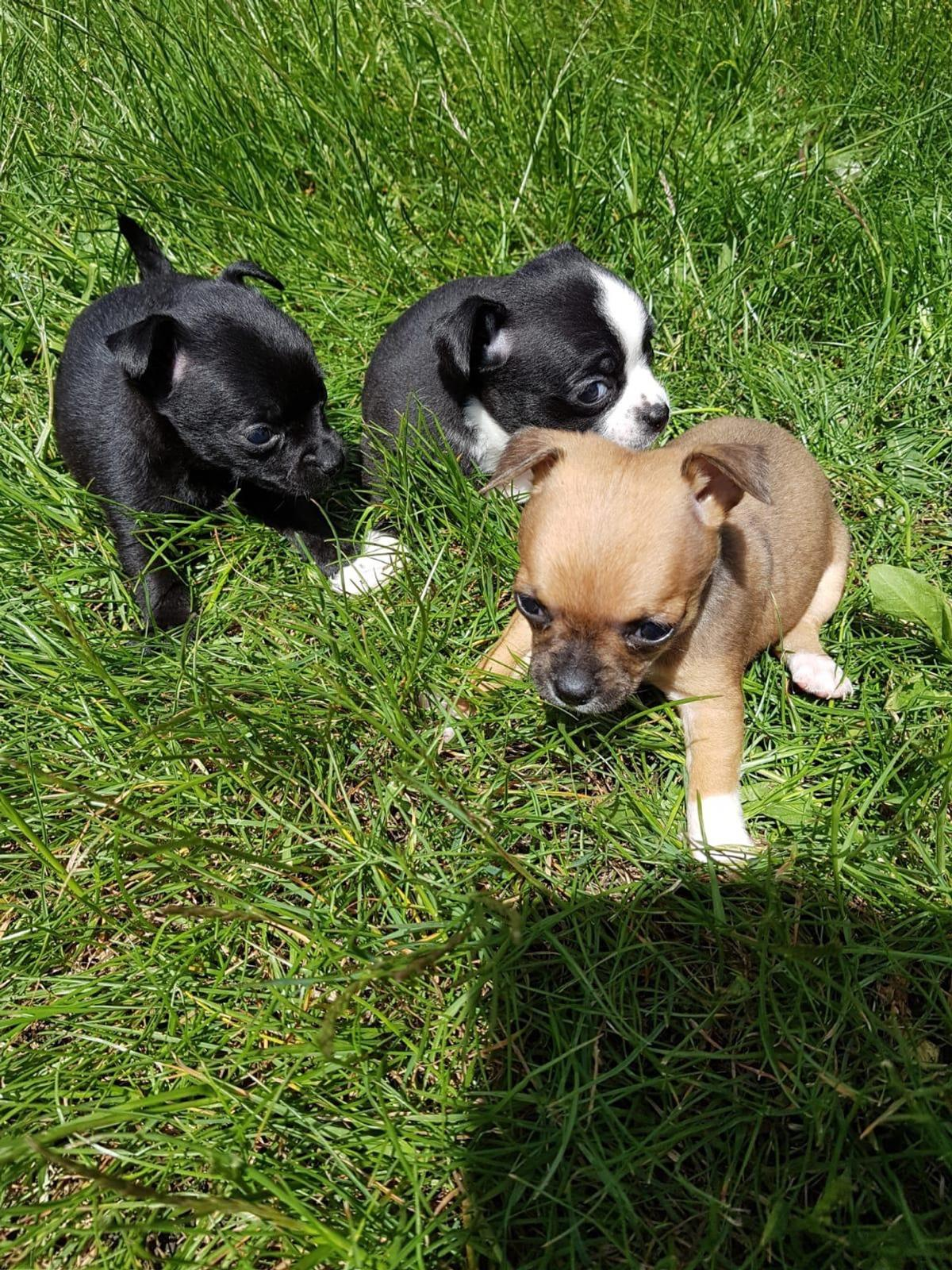4 Miniature chugs for sale in Luton for £550 00 for sale