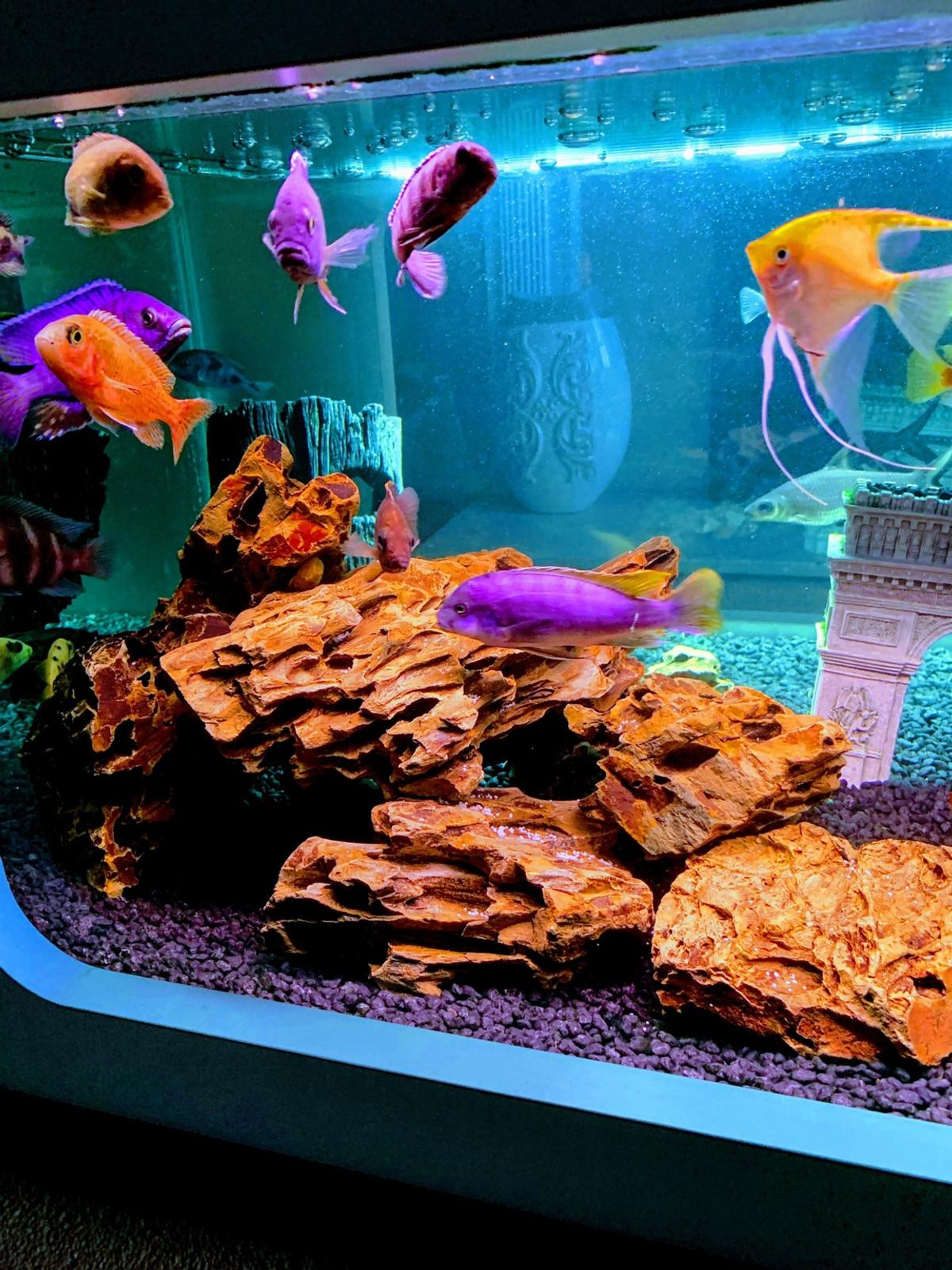 Coffee Table Fish Tank In Cm2 Chelmsford For 55000 For
