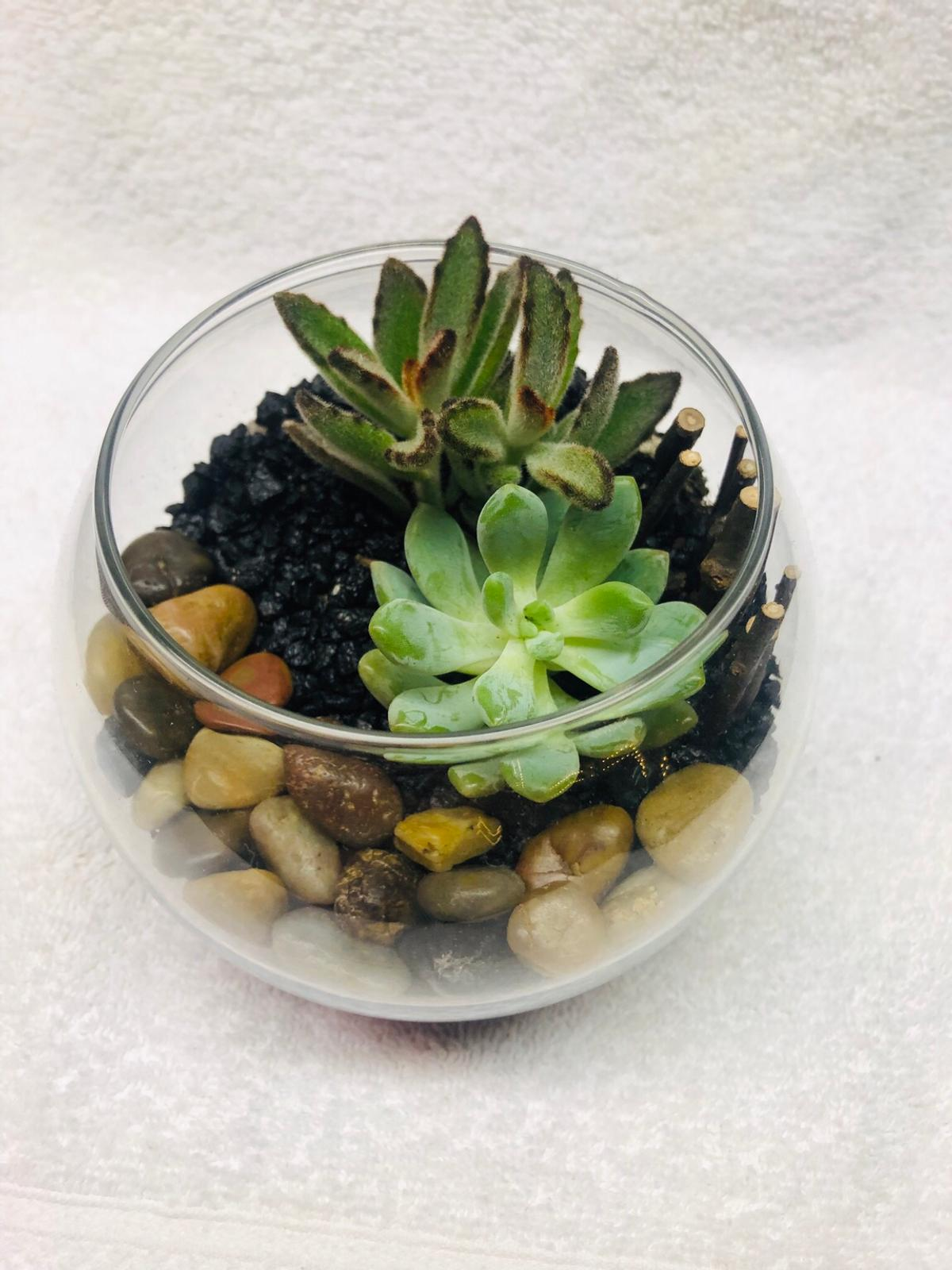 Small Rose Bowl Succulent Terrarium In 94544 Hayward For Us 20 00 For Sale Shpock