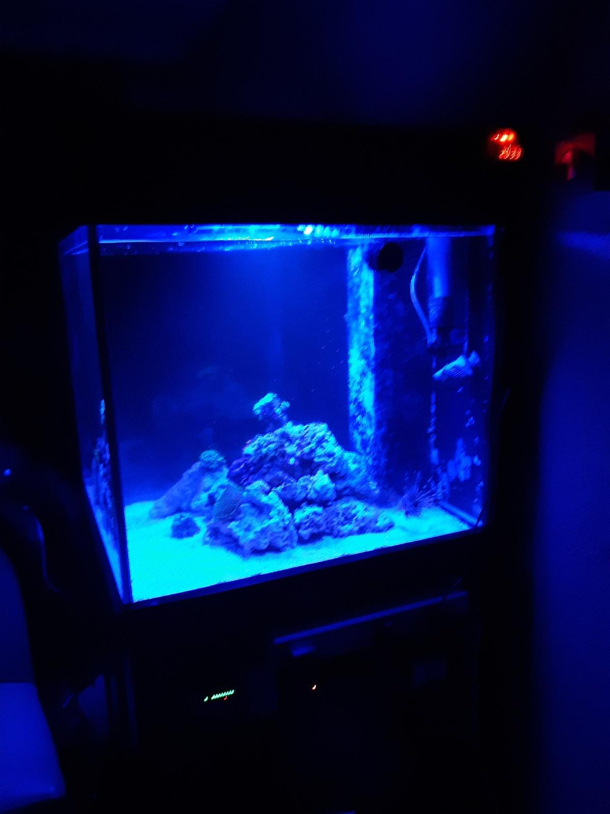 I'm selling complete marine set up due to moving their is a few live corals as well as a lion fish who has a great personality the tank has a sump as well with skimmer and heater with return pump grab a bargain and make me an offer many thanks