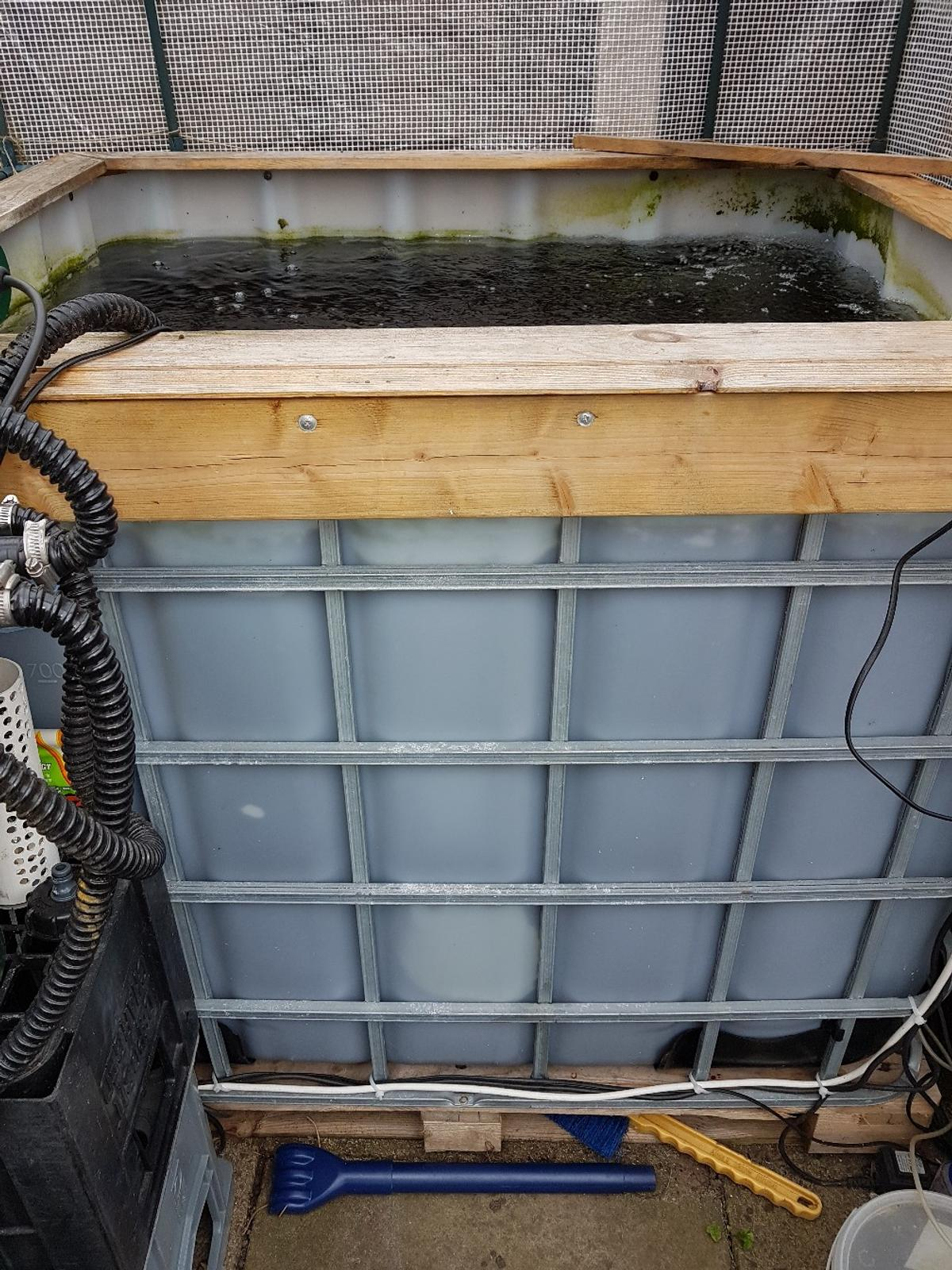 1000 ltr water tank .42 inches x 51 inches x 43 inches deep.koi fry growing sytem .this comes compleat with internal pump and filter.external filter.external uv lamp.external air pum and 2 air stones .and about 22 young koi carp.sizes apx 3 inches to 4 to 6inches mostly orange and orange/ white .healthy fish and setup 3 years old collection only.you must bring some one with you to collect as the tank as to be lifted over a 6ft fence but its not that heavy. CASH ON COLLECTION