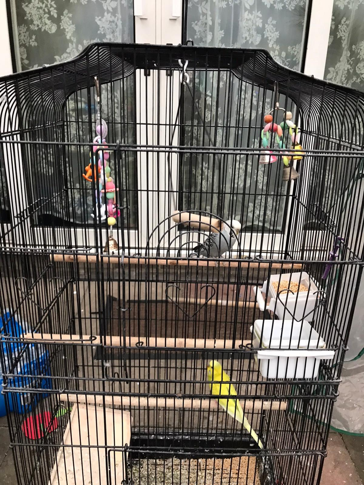 2 lovly budgies male and female come whith cage and foot