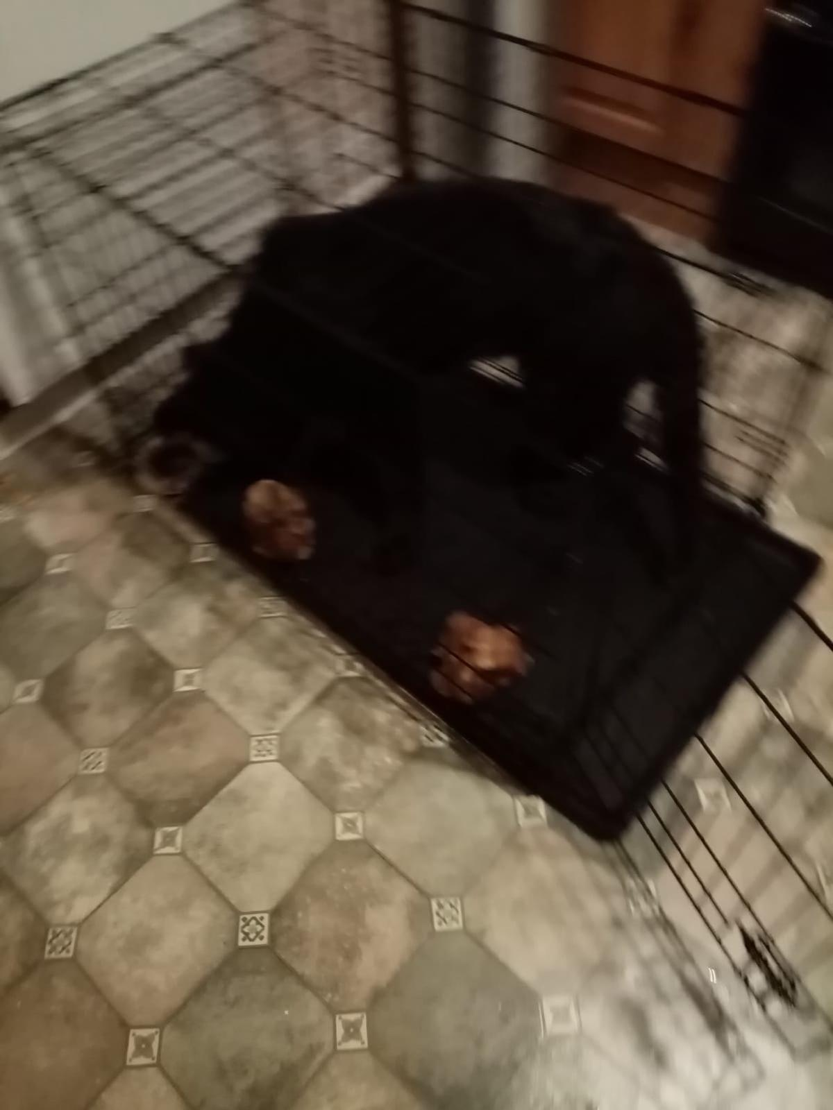 Medium sized metal dog cage .Folds away,and comes with a removable easy to clean tray . 2 locks. Bought from pets at home 3 months ago, dogs got too big for it now.