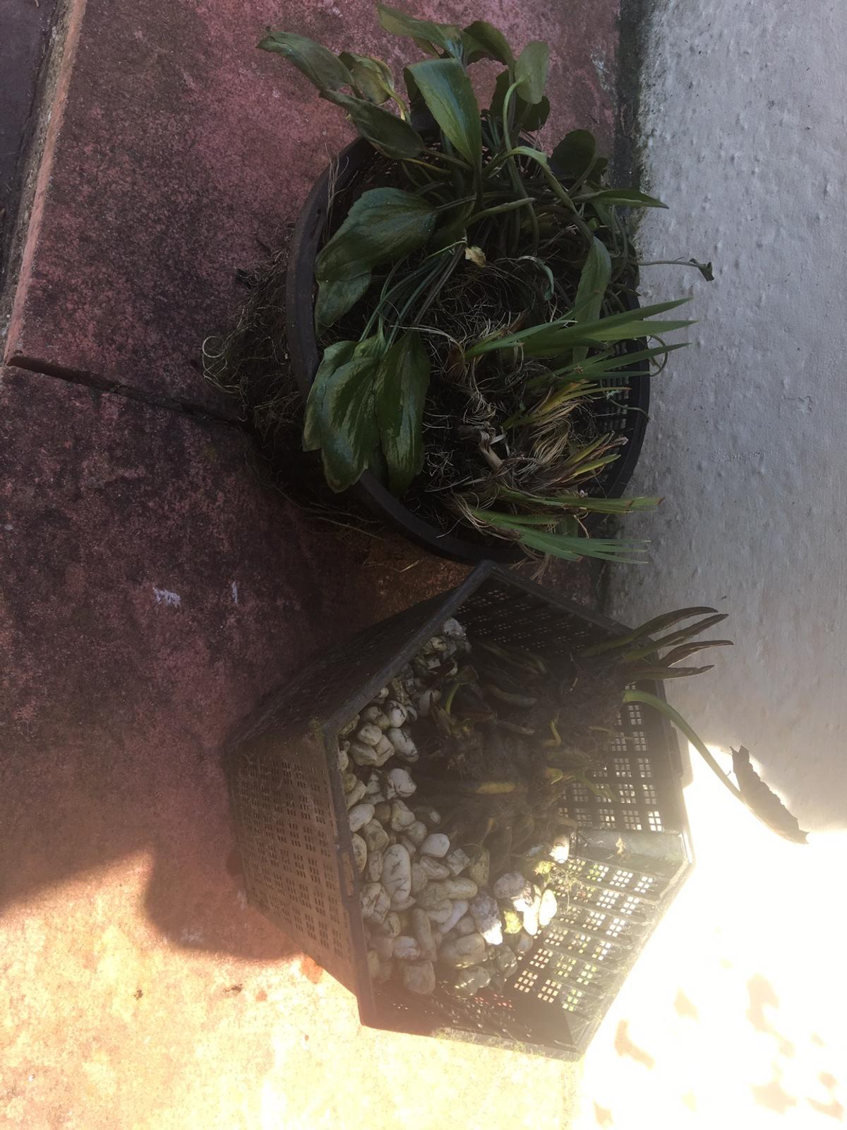 2 large , 2 small pond plants