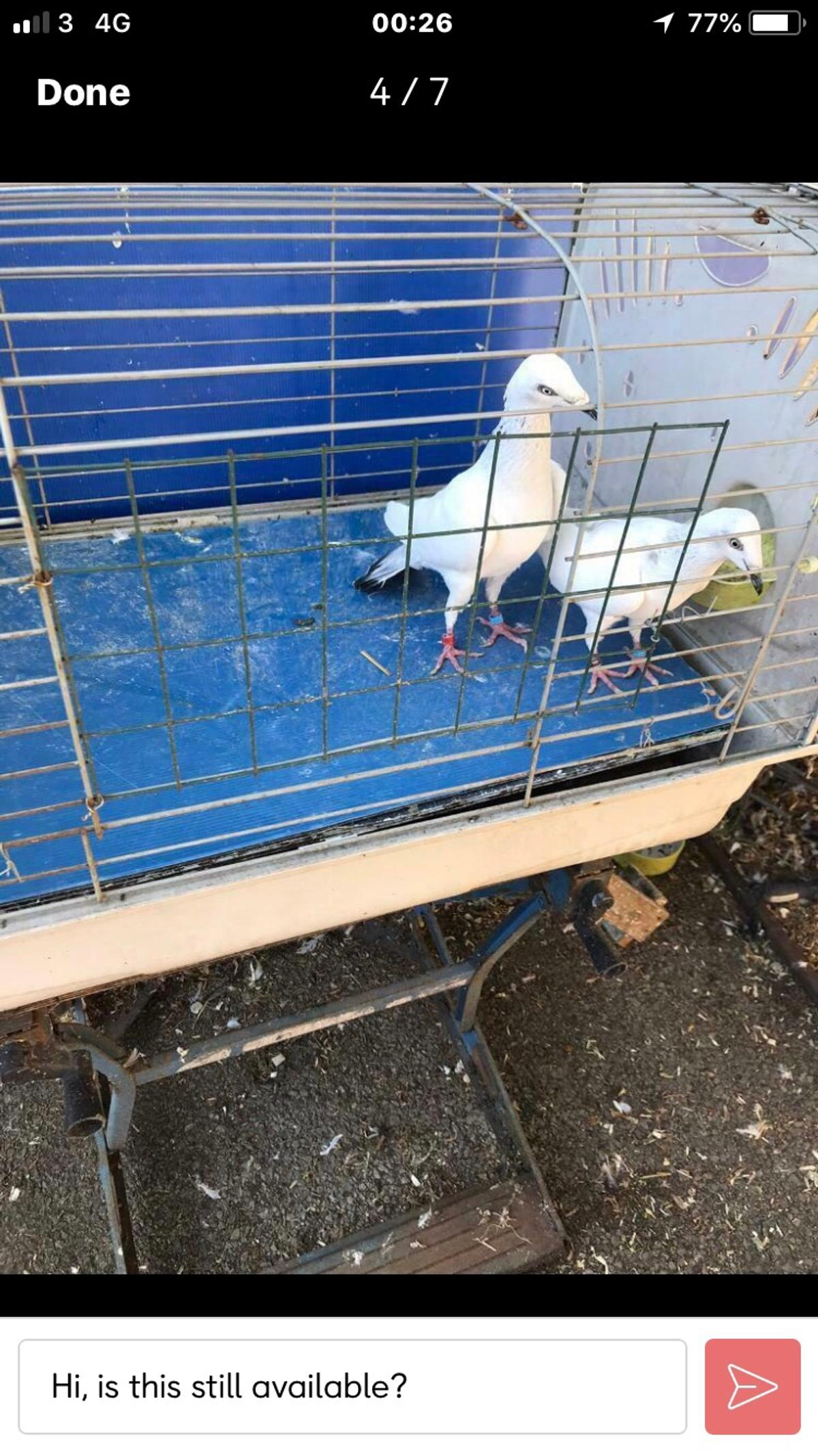 Hi for all I have vary nice and healthy pigeon  Also I have baby  Please call for more info  Price start from £10