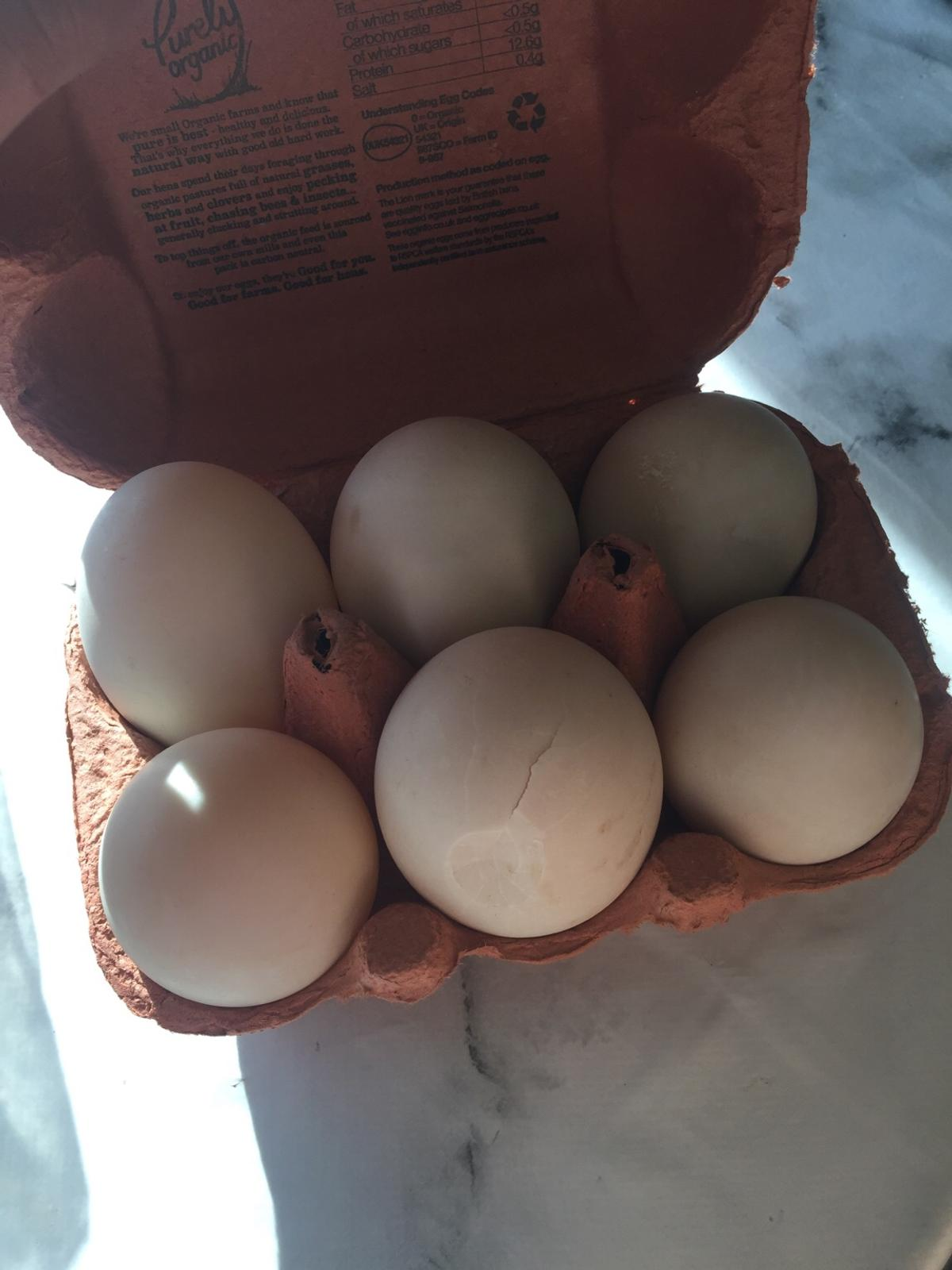 We have loads of chickens so we get fertile eggs also we have quil eggs they are deftly fertile ducks eggs is a £2 a eggs chicken eggs are £1 a egg etc etc pls comment for more info