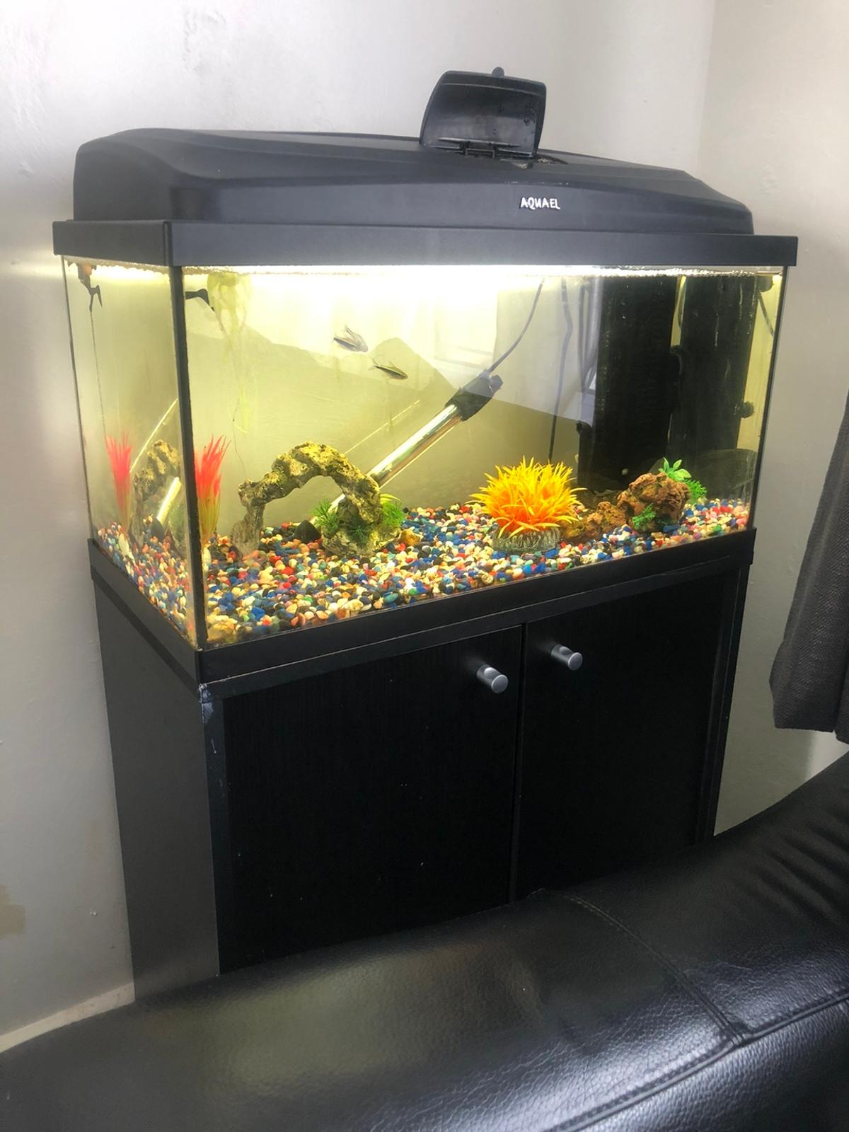 Aquael fish tank lovely condition well looked after complete with stand NO FISH OR GRAVEL  Dimensions of TANK length 61cm x height 41cm depth 31cm Dimensions of STAND are length 61cm x height 66cm x depth 31cm  Approximately 60-70 litres  Also comes with Fluval u4 internal filter ( new pads and media) Heater Ornaments Air stone and pump Magnetic cleaner  ONLY SELLING DUE TO BUYING BIGGER TANK  ANY QUESTIONS PLEASE ASK  £120 ono  Collection only